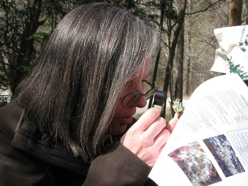 teacher studying lichens in the Smokies.