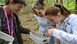 6th grade terrestrial invertebrate inventory