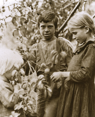 A young boy and two girls pick fruit from an orchard tree