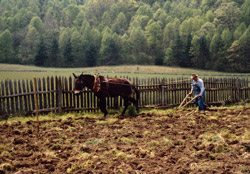 Spring plowing at the Mountain Farm Museum at Oconaluftee Visitor Center.
