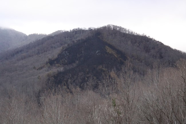 View of the burned area from Carlos Campbell Overlook