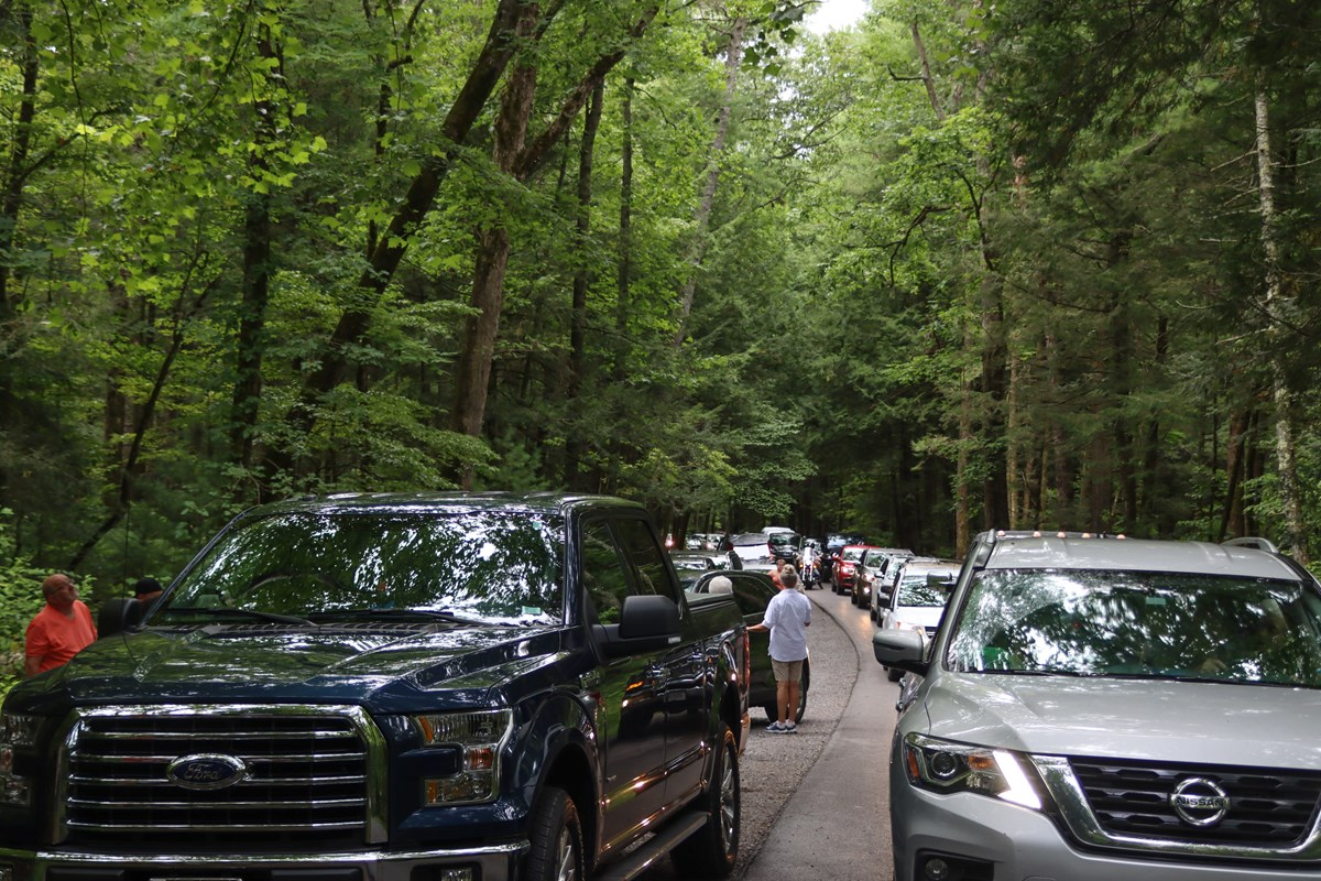 The image shows vehicles lined up along the Cades Cove Loop Rd.