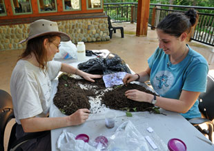 Researchers Anita Juen and Daniela Straube sift soil samples.