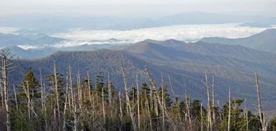 Fraser firs at Clingmans Dome have died from BWA.