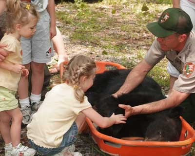 Bill Stiver shows captured bear to kids prior to work-up.
