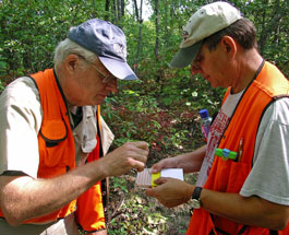 Researchers Bill MacDonald and Mark Double collect chestnut bark and blight samples.