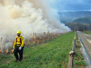 Controlled fire in Cades Cove.