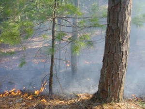 Wildland fires that occur in certain areas are allowed to burn.