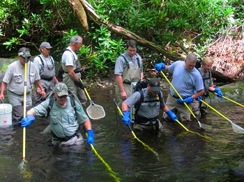A park fisheries crew and volunteers electrofish in a park stream to sample brook trout populations.