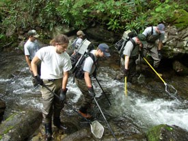 NPS Fisheries Managers work in streams to restore native brook trout.