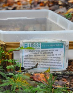 A USGS project collects falling leaves, which will be tested for mercury.