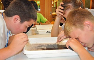 Students use magnifying glasses to spot the tiny water mites.