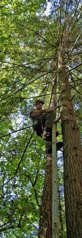 NPS ranger Rick Varner climbs high into the trees to replace broken bear cable systems.