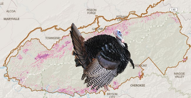 Wild turkey distribution map