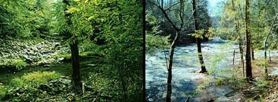 A composite of 2 photos showing the same area of a stream in Great Smoky Mountains National Park. One photo was taken during a drought year (left) and the other photo during a flood year (right).