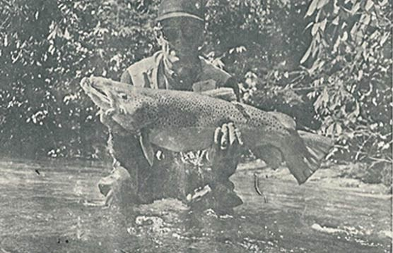 A photograph of fisherman Kent Williamson.  Kent is holding his record brown trout.