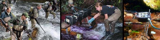 A composite of three photographs showing fisheries staff participating in different fisheries management practices.