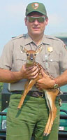 NPS wildlife manager Kim Delozier with a white-tailed deer fawn.