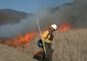 Igniting a prescribed fire in Cades Cove