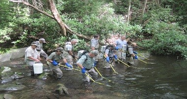 A fisheries crew and volunteers electrofish in a stream