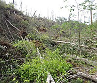 tornado damage in the park