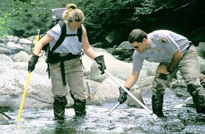 Park rangers electroshock a stream to remove non-native fish species.