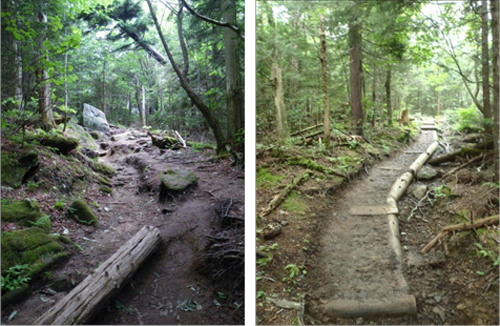 Before and after of log structures in trenched area