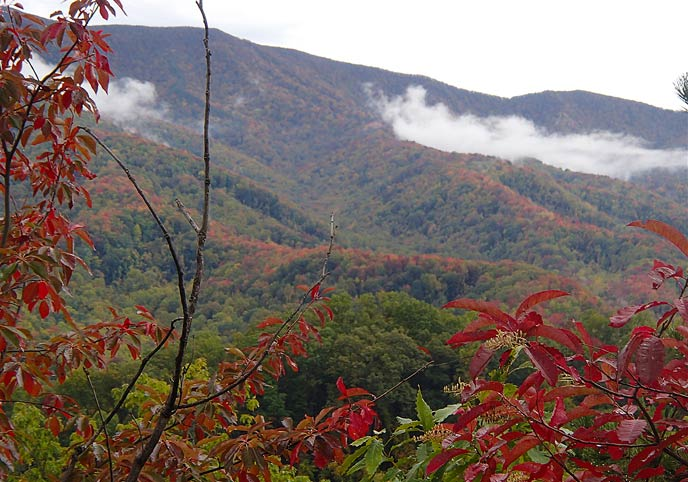 The brightr crimson foliage of sourwood trees frames a view of Defeat Ridge.