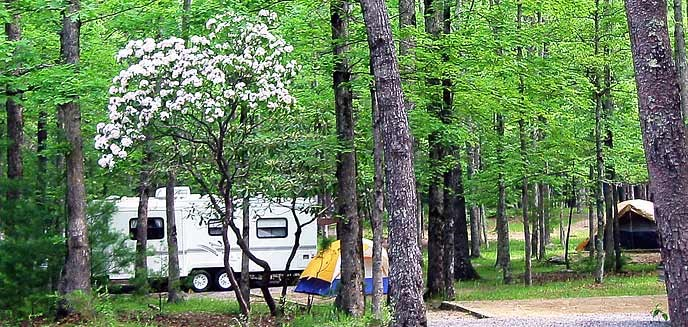 An RV and tents set up in a campground