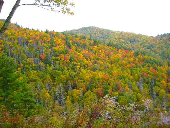 The mountain ridges around Cataloochee Valley are decked in fall colors.