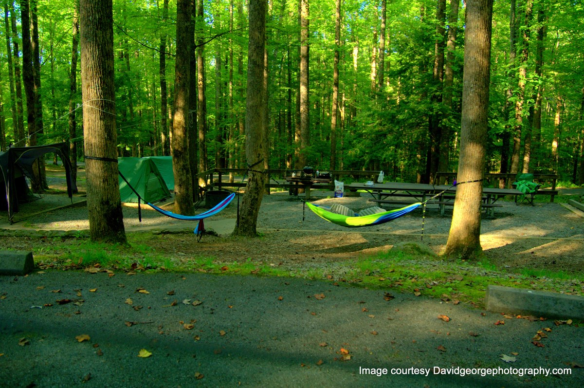 Hammocks hanging from trees at campsite