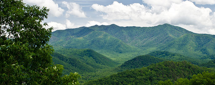 Mount Le Conte covered in the bright green of spring leaves.
