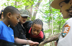 Join a ranger-guided program to learn about the park.