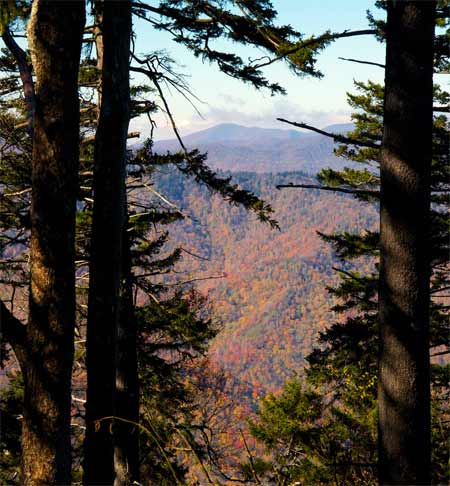 Distant mountains are framed by spruce trees in theis view from a high elevation trail