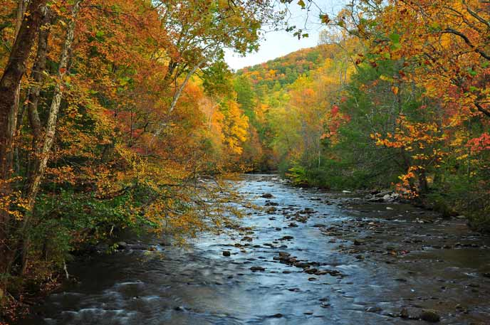 Colorful trees line the Little River at Metcalf Bottoms