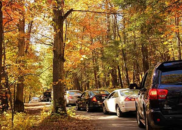 A long line of cars on the Cades Cove Loop Road