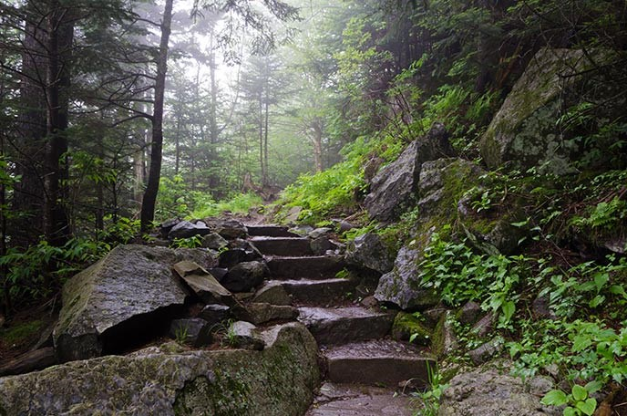 Stone stairs on a hiking trail in the woods