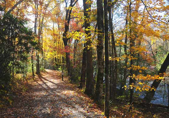 Lower elevation trails are good choices for viewing color this week.