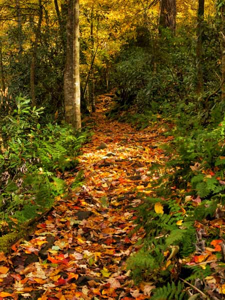 A hiking trail covered in golden-colored fallen leaves