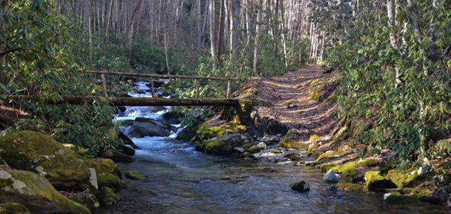 A log bridge and trail cross a stream
