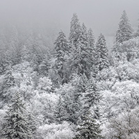 Foggy, snowy weather shrouds trees along Newfound Gap Road