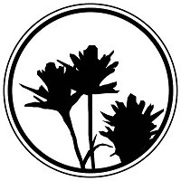 A silhouette of the plant described in the text