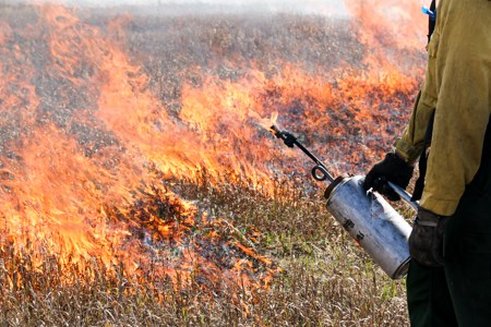 A firefighter holds a drip torch, as the dry grasses behind them burn.