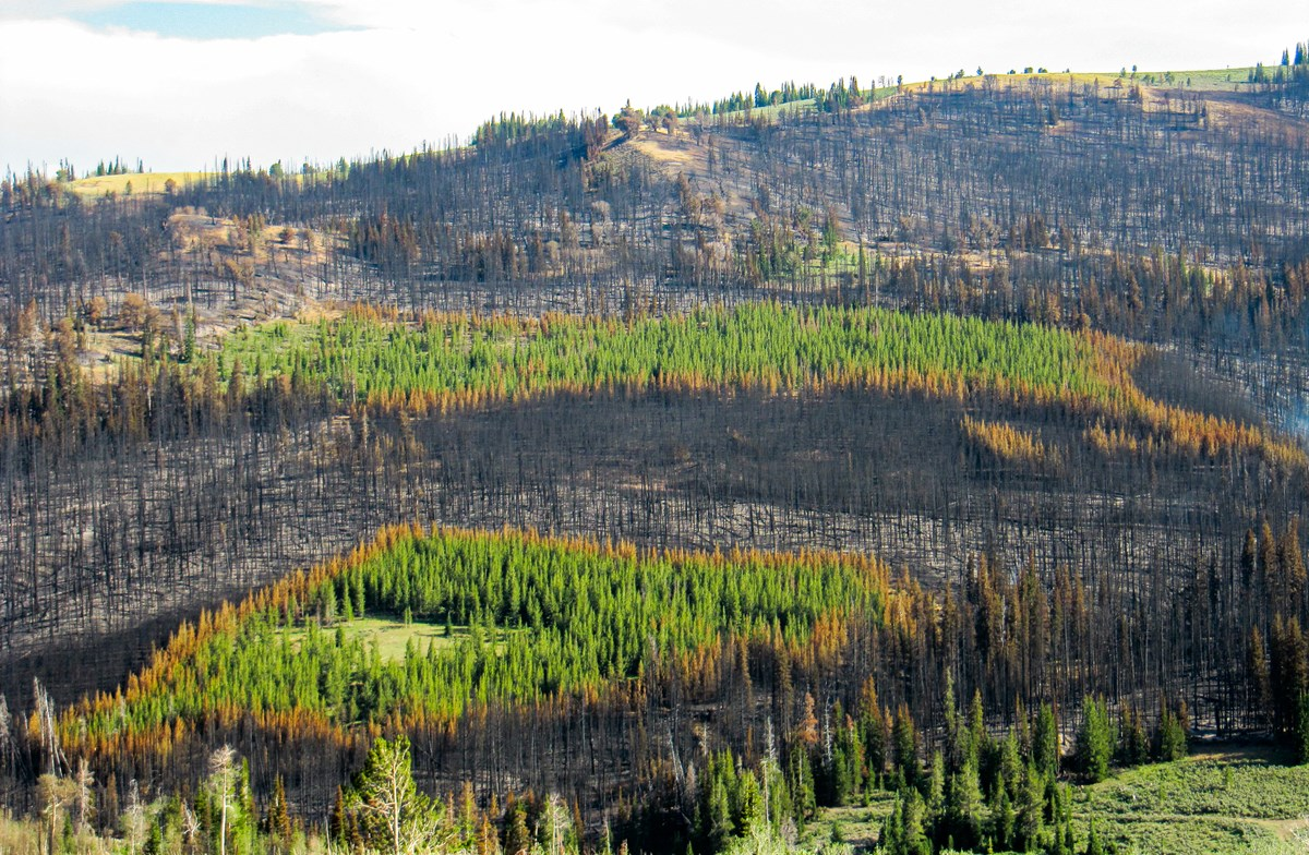 A hillside is covered with a patchwork of burned and unburned forest and meadows.