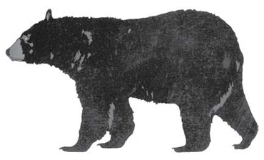 blackbear_comparison