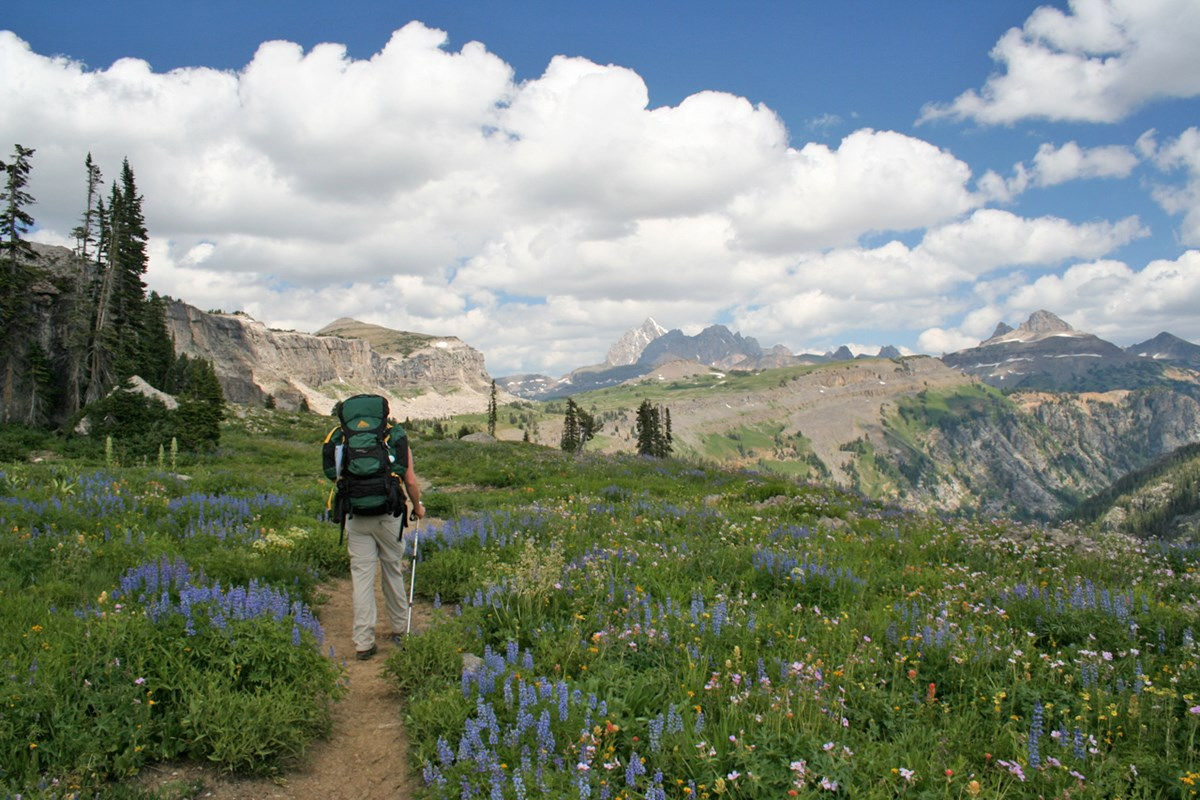 Backpacker on trail, carrying large green backpack, walking through alpine wildflowers