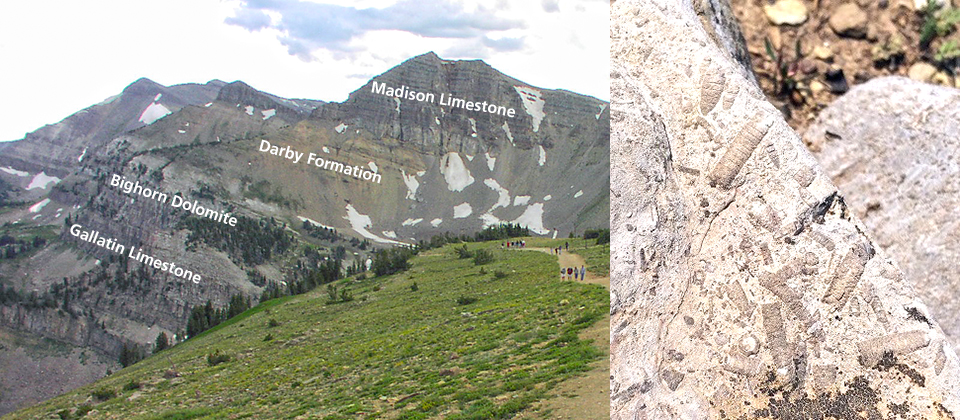 Left - Southern Teton Range with sedimentary rock layers labeled. Right - Limestone containing marine fossils.