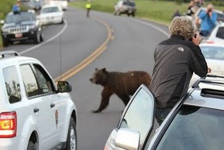 bears and cars