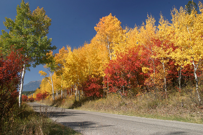 Fall Colors on the Moose-Wilson Road
