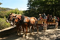 Modern-day carriage rides in Acadia National Park, NPS photo/Ray Radigan